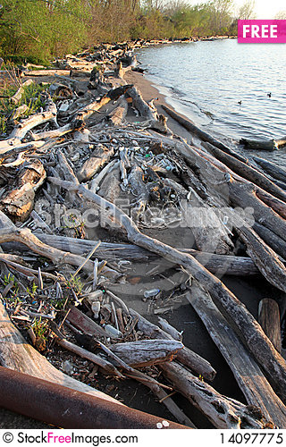 Free Littered Shore Royalty Free Stock Photo - 14097775