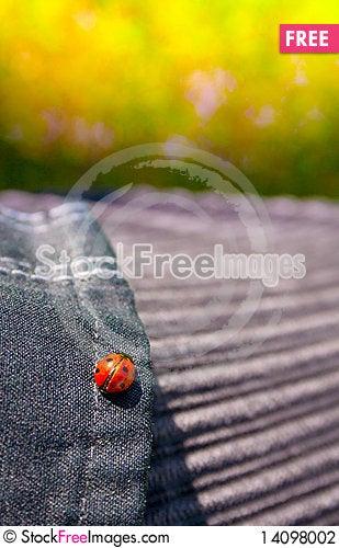 Free Ladybird Stock Photography - 14098002