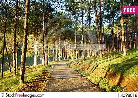 Free Pine With Sunrise Royalty Free Stock Photos - 14098018