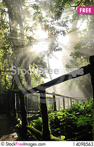 Free Forest Stock Photos - 14098563