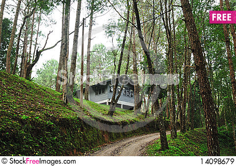 Free House In The Forest Royalty Free Stock Images - 14098679