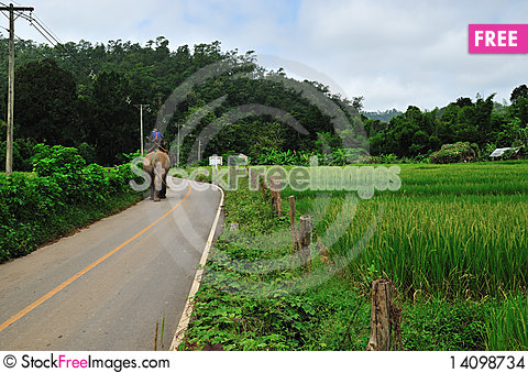 Free Rice Field With Elephant Stock Images - 14098734