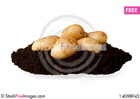 Free New Potatoes Stock Photos - 14098943