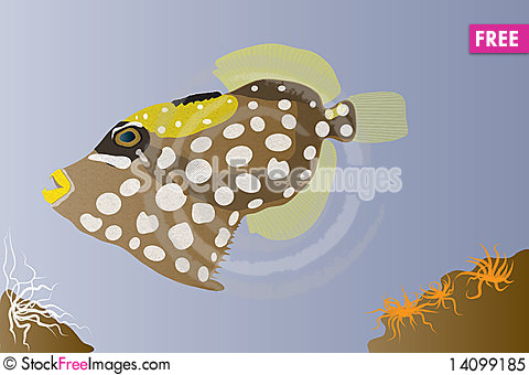 Free Clown Triggerfish Royalty Free Stock Photo - 14099185