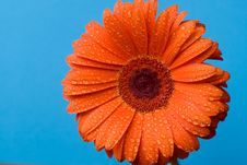 Free Orange Flower Stock Image - 14091171