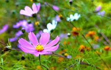 Free Purple Flower Stock Photography - 14091442
