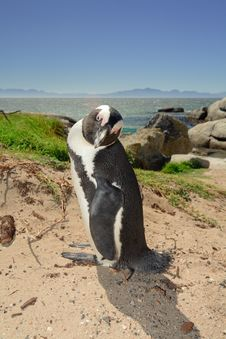 Free Penguin Posing For The Camera Stock Photo - 14091700