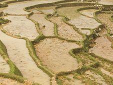 Reisfelder,Nordvietnam Stock Photos