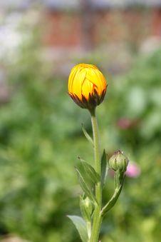 Free Spring Bud Stock Image - 14094151