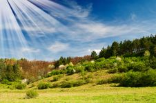Wonderful Sunbeams And Exciting Blooming Trees. Royalty Free Stock Photo