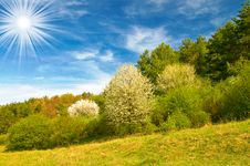Beautiful Sun Above Spring Forest By Spring. Royalty Free Stock Photography