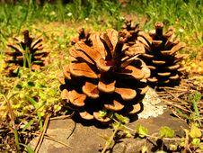 Free Cones. Stock Image - 14095291