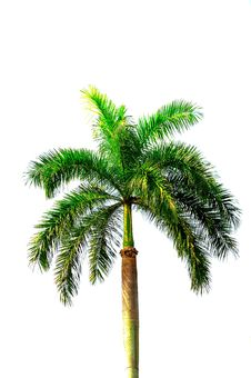 Free Coconut Royalty Free Stock Image - 14096096