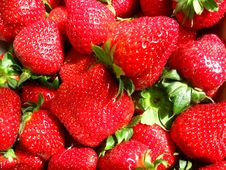 Free Red Strawberries Royalty Free Stock Photo - 14097005