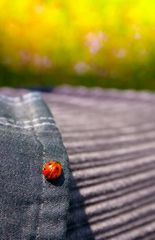 Free Ladybird Stock Photography - 14098002