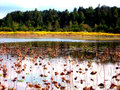 Free Autumn Waterscape Royalty Free Stock Photography - 1418577
