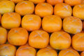 Free Persimmons Stock Photography - 1419242