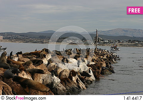 Sea Lions at Breakwater Cove Stock Photo