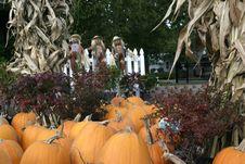 Free Pumpkins Stock Image - 1410711