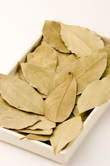 Free Bay Leaves Royalty Free Stock Image - 1410926