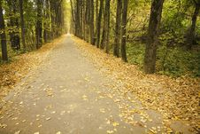 Free Avenue In Garden In Autumn. Stock Images - 1411454