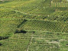 Free Vineyard Stock Photography - 1411732