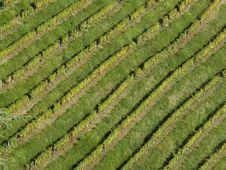 Free Vineyard Stock Images - 1411744