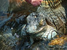 Free Wet Lizard Royalty Free Stock Photos - 1412168