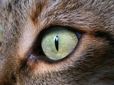 Free Cat S Eyes Royalty Free Stock Images - 1413469