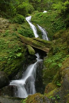 Free Quinault Area Waterfall Stock Photography - 1413842