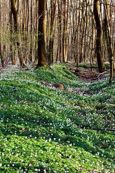 Free Springtime Royalty Free Stock Image - 1414896
