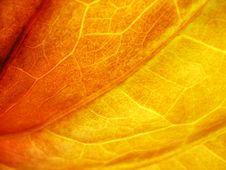 Free Autumn Leaf Stock Photo - 1414940