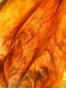 Free Autumn Leaf Stock Photography - 1414982