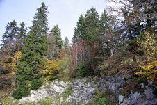 Autumn View 2 Royalty Free Stock Photo
