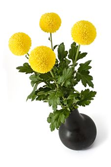 Free Chrysanthemum Stock Image - 1416181