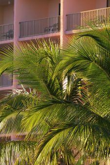 Free Coconut Resort Stock Photography - 1417602