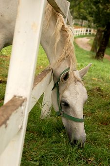 Free The White Horse Stock Photos - 1417673