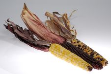 Free Corn Stock Photos - 1419103