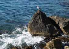 Free Seagull Stock Images - 1419634
