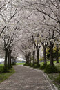 Free Spring Blossom Royalty Free Stock Image - 14108426