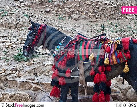 Free Pony With Dressed Saddle Royalty Free Stock Photo - 14101095