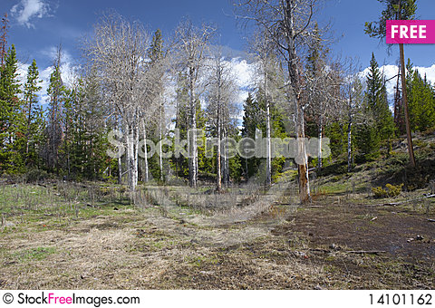 Free Wild Forest Stock Photography - 14101162