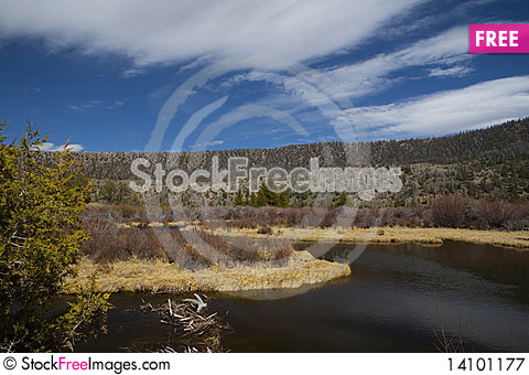 Free Wild In Wyoming Royalty Free Stock Photography - 14101177