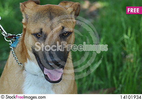 Free Brown Dog Stock Images - 14101934
