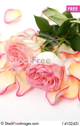 Free Pink Roses Stock Image - 14102431
