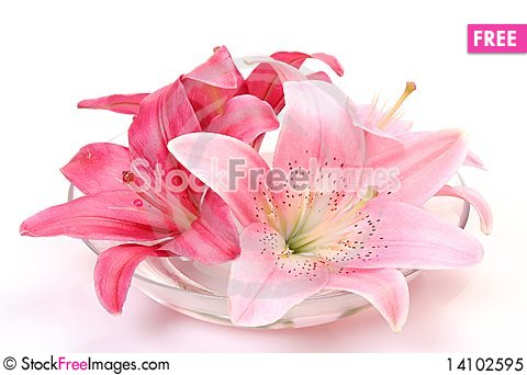 Free Fine Lilies Royalty Free Stock Photo - 14102595