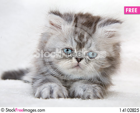 Free Portrait Of Fluffy Kitten Royalty Free Stock Photo - 14102825