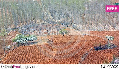 Free Trees And Fields Royalty Free Stock Images - 14103009
