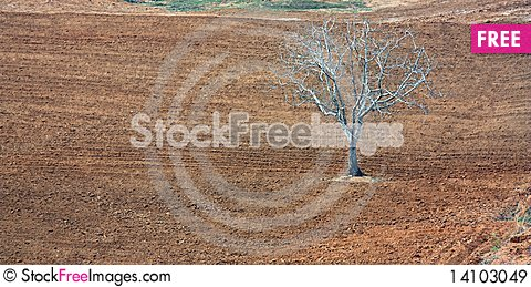 Free Lonely Tree Royalty Free Stock Images - 14103049