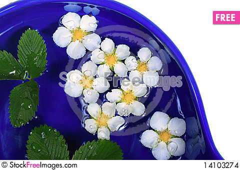 Free Daisies In A Bowl Stock Images - 14103274